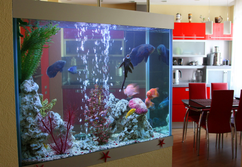 Comment choisir un aquarium mural for Acuarios modernos