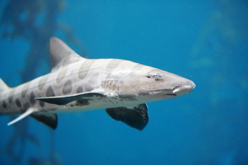 Comment caresser des requins ?